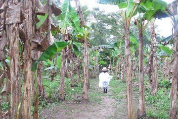 Ruta del cacao watt
