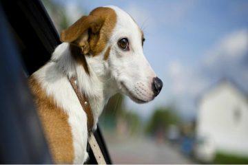 revista watt, perros, mascotas, taxis