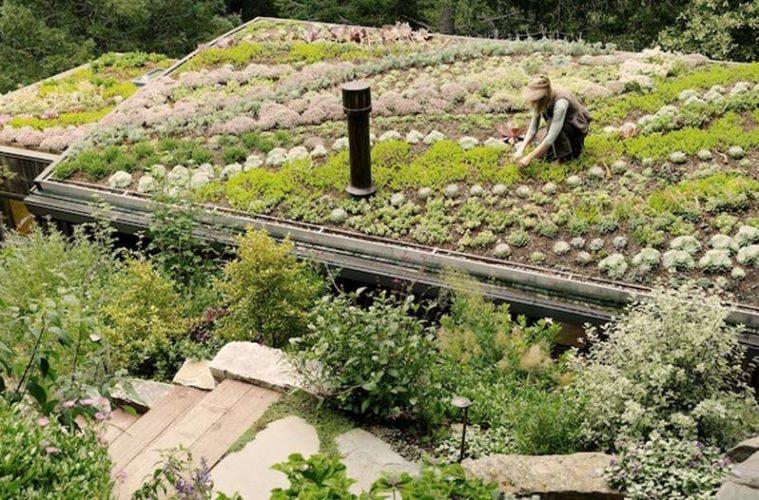 terraza verde watt